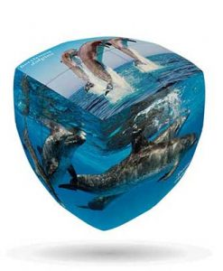 Dolphins-V-CUBE-2-Pillow-1
