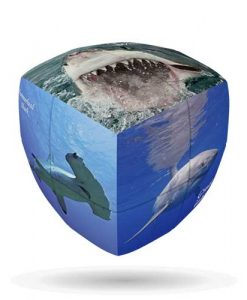 Sharks-V-CUBE-2-Pillow-1