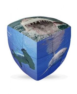Sharks-V-CUBE-3-Pillow-1