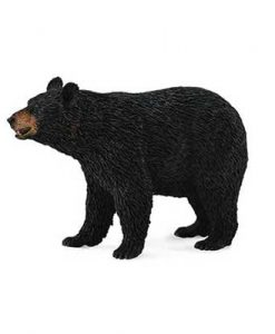 american-black-bear-88698