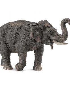 collecta-collecta-elefantas-asiatikos