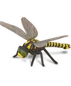 golden-ringed-dragonfly-88350