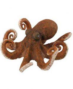octopus-88485