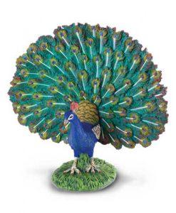 peacock-88209