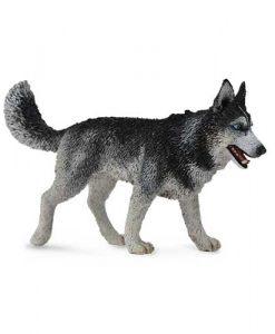 siberian-dog-88707