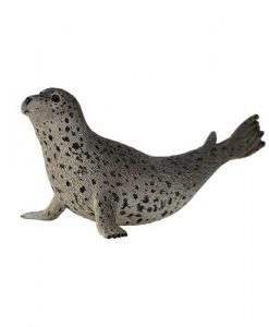 spotted-seal-88658